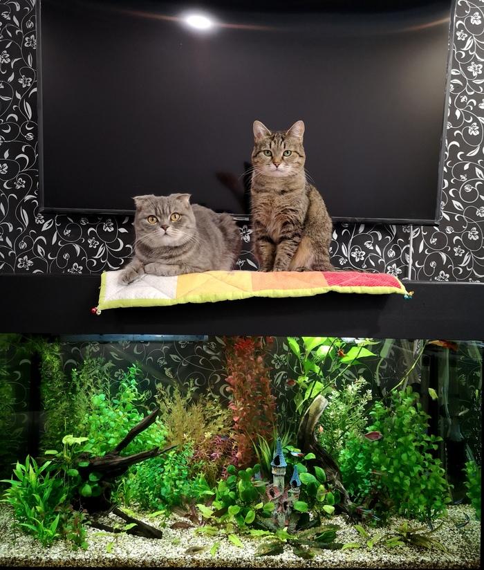 Аквариум с искусственными растениями 2 месяца спустя Аквариум, Фотография, Аквариумные рыбки, Длиннопост, Кот