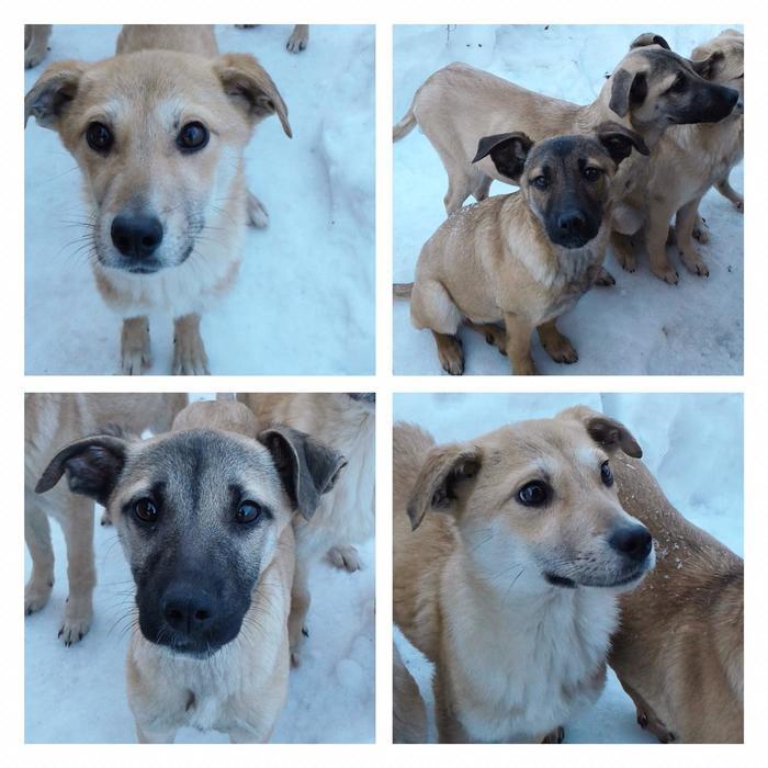 Найдены щенки Щенки, Собака, Без рейтинга, Москва, Животные, Помощь животным, В добрые руки, Ищу дом