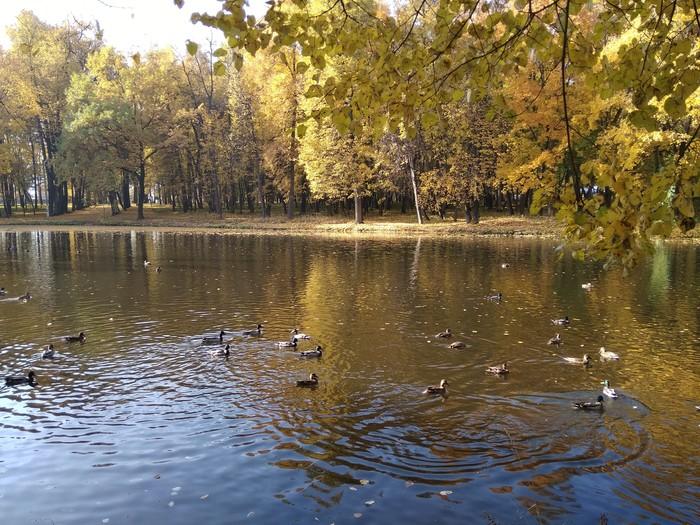 Воскресенский парк Парк, Осень, Жёлтые листья, Длиннопост