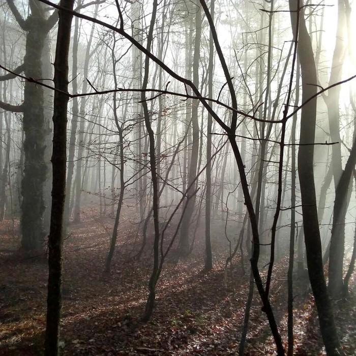 Туманный Крым Крым, Лес, Туман, Фотография, Красота, Длиннопост