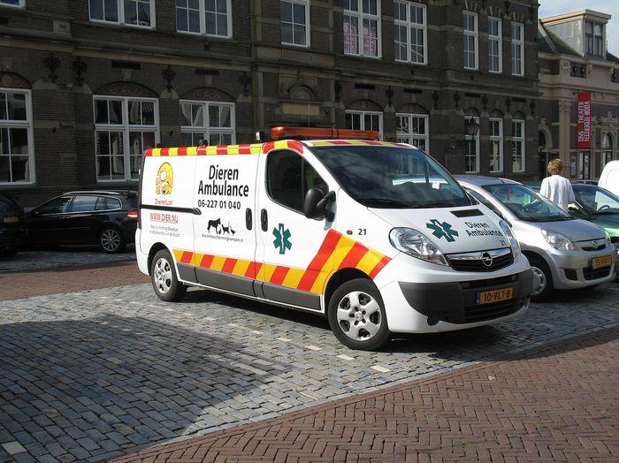 Скорая помощь для животных в Нидерландах Животные, Скорая помощь, Нидерланды, Голландия, Длиннопост