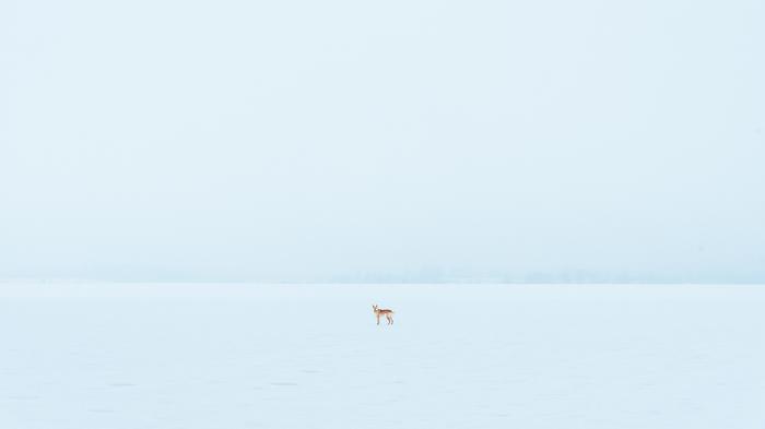 Туман над заснеженным полем. Фотография, Пейзаж, Зима, Минимализм, Лайка, Собака, Беларусь