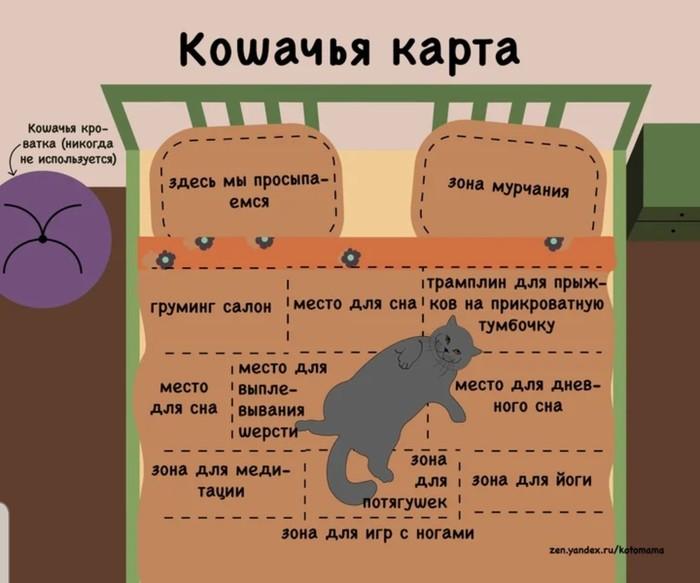 Кошачья карта. Кот, Кровать, Все дела