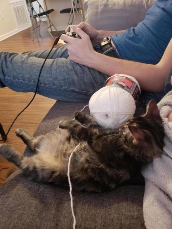 Кот — животное полезное ... Полезный кот, Фотография, Кот Матроскин, Видео