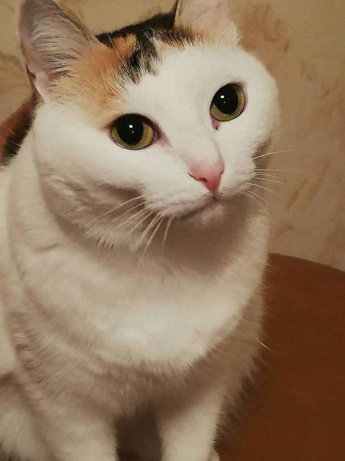 Понедельникот. Трехцветная кошка, Понедельник, Питомец, Животные, Котомафия, Длиннопост, Кот