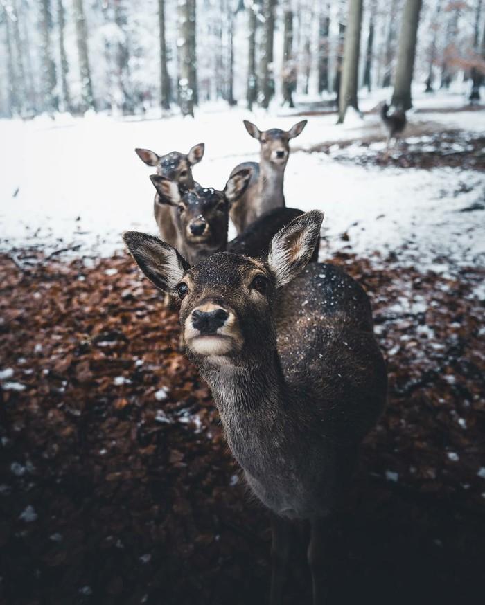 Bayern Wald Фотография, Животные, Олень, Большие кошки, Красивое, Длиннопост