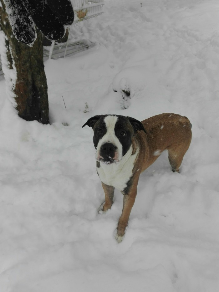Зимушка Собака, Зима холода, Фото на тапок, Длиннопост