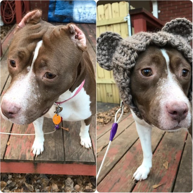 Моя сестра спасла эту девочку и дала ей новые уши