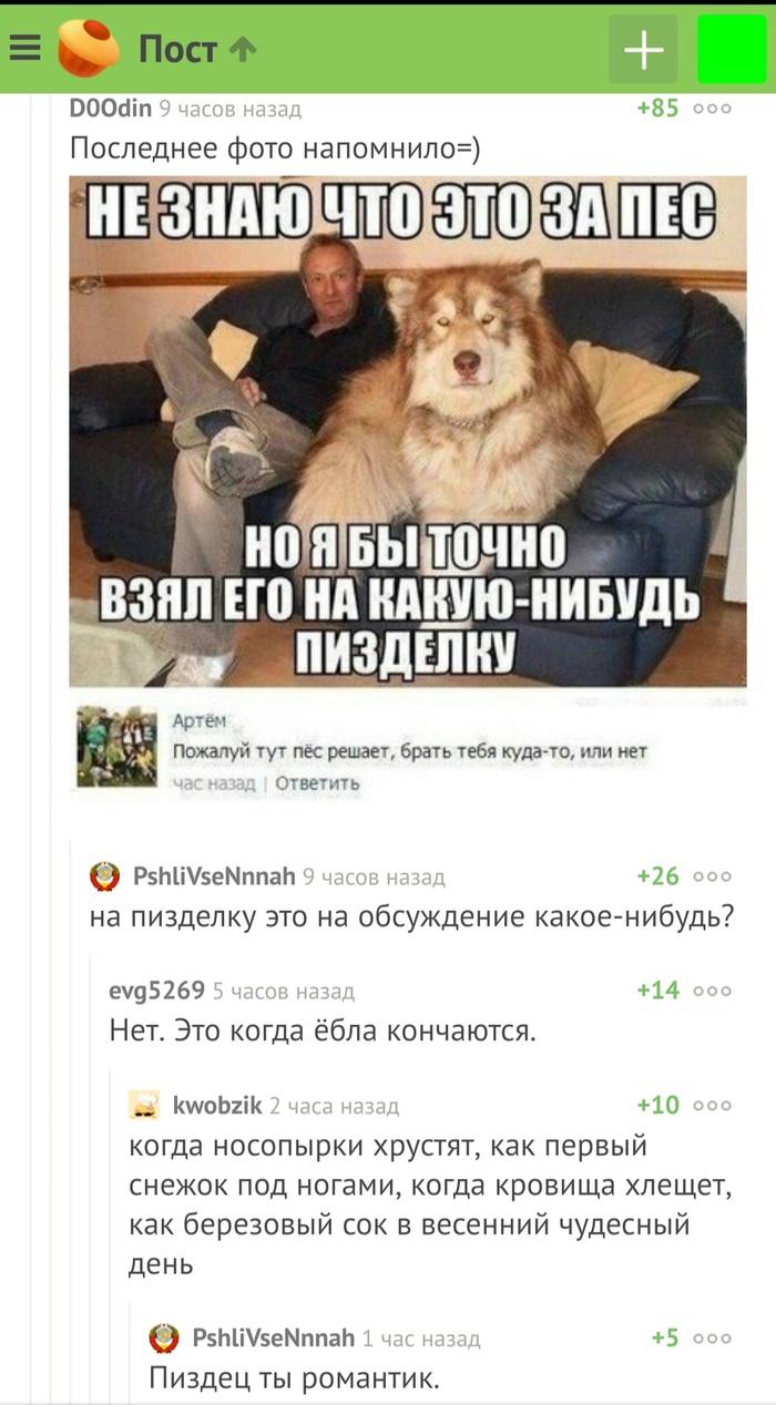 Романтик Мат, Собака, Собаки и люди, Комментарии на Пикабу, Романтик, Скриншот