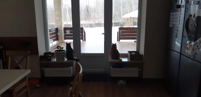 Друзья укрепили на перилах кормушку для птиц, теперь у котов есть свой телевизор.