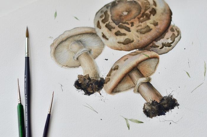 Грибы, акварель Акварель, Ботаническая иллюстрация, Арт, Рисунок, Грибы