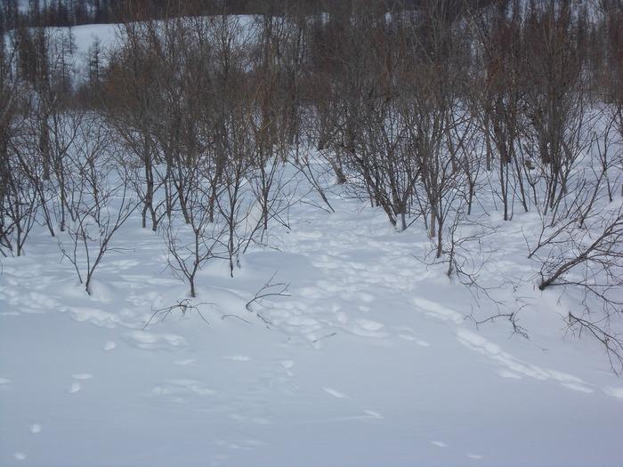 Мастер маскировки. Найди зайца. Снег красота безмолвия, Зима, Найди предмет