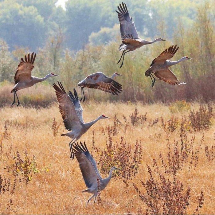 5 животных родом из другой эры, которые дожили до нашей Природа, Животные, Факты, Длиннопост