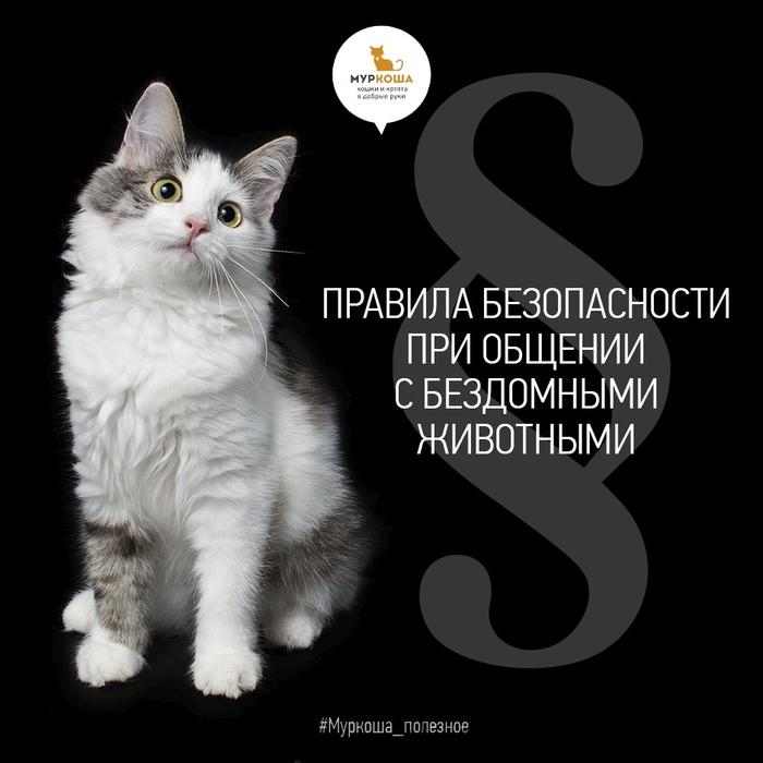 Правила безопасности при общении с бездомными животными. Муркоша, Приют муркоша, Полезное, Помощь животным, Кот, Длиннопост