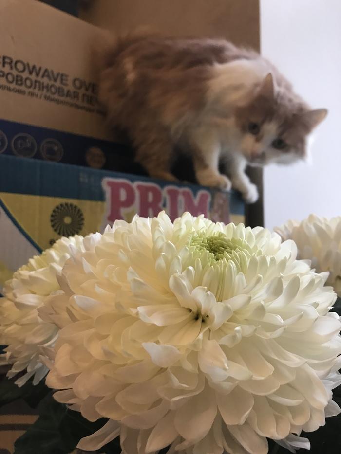 14 февраля. Кот, Цвет, 14 февраля, Длиннопост, Домашние животные