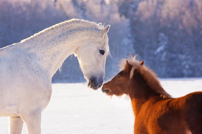 Всем любви! Canon, Животные, Лошадь, Фотография