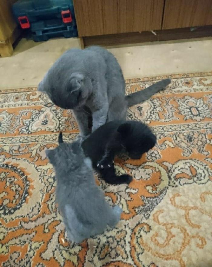Кот Воланд Кот, Котомафия, Черный кот, Длиннопост