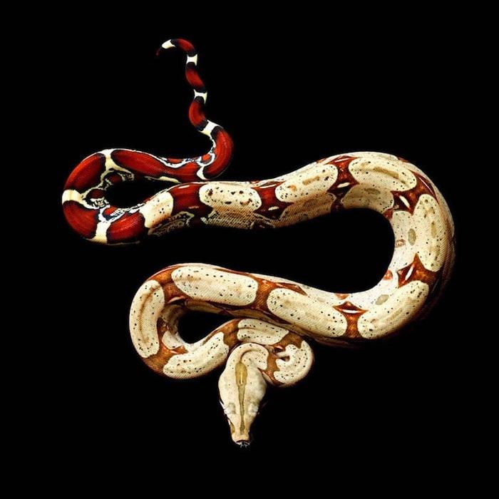 Проект Serpentine Змея, Проект, Фотография, Длиннопост