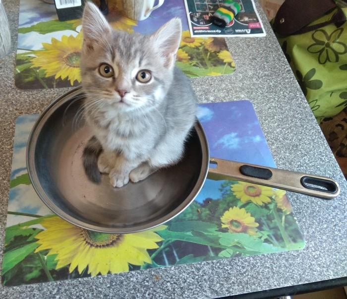 Как отучить кошку лазить по столам? Кот, Воспитание, Посуда, Домашние животные