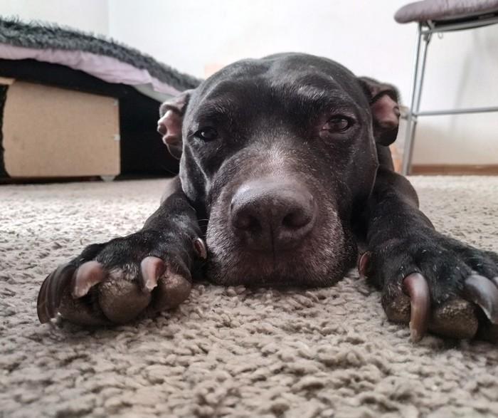 Когда все дома) Лучший друг, Питбуль, Кайф, Пока все дома, Собака