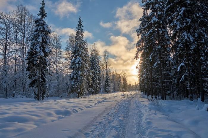 Морозный день Начинающий фотограф, Зима, Природа, Фотография