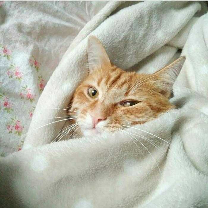 Как воспитать кота? Воспитание, Проблема, Длиннопост, Кот, Дрессировка
