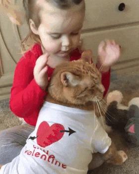 Коты тоже бывают хорошими мальчиками