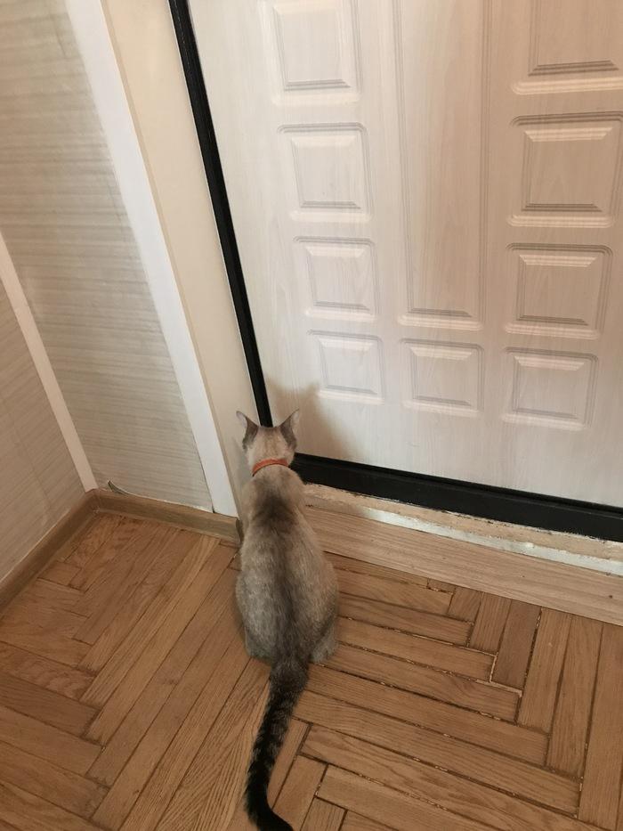 Ожидание. Кот, Ожидание, Мистика, Друг, Домашние животные, Домашний любимец, Милота