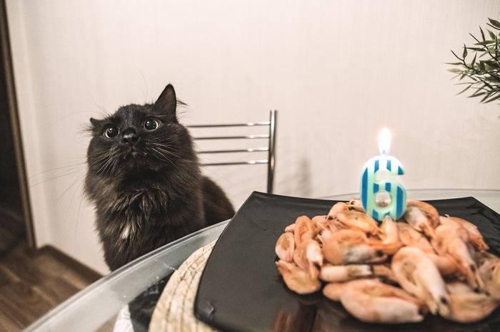 С днём рождения, друг! День рождения, Кот, Креветки, Домашние животные