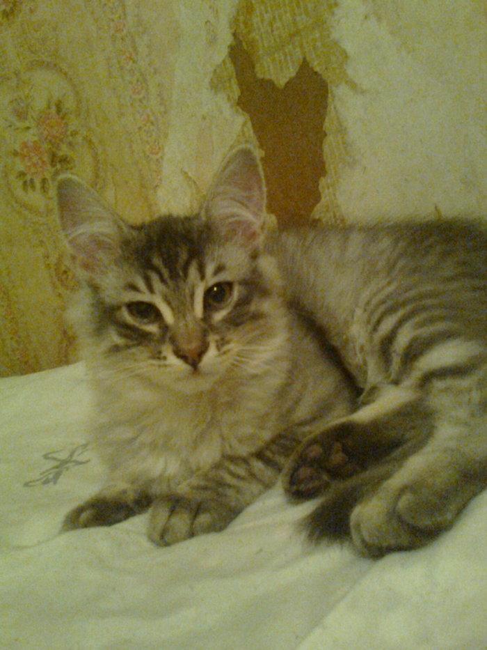 Потерялся Потерялся кот, Помогите найти, Без рейтинга, Кот, Город Орел, Помощь
