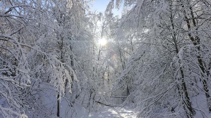 Утро исполнения желаний Фотография, Пейзаж, Времена года, Huawei P20Lite, Зима, Длиннопост