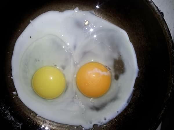 Гетерохромия у яичницы