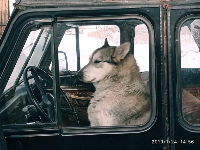 Собака охраняка