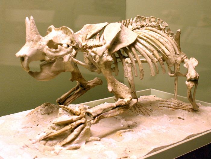 Рогатый суслик. Палеоарт, Реконструкция, Палеонтология, Грызуны, Рога