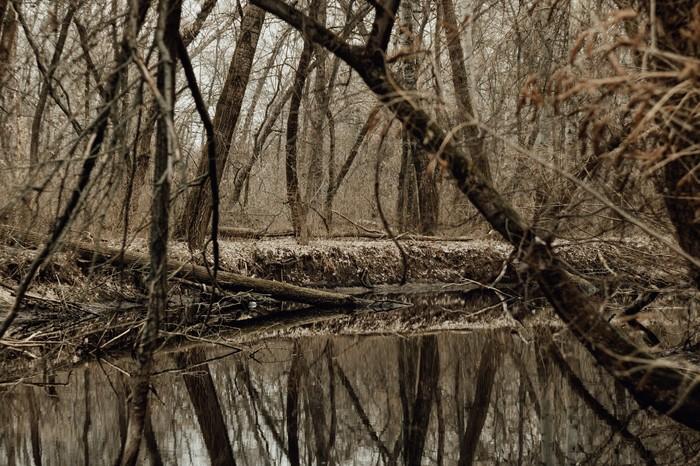 Запорожские плавни Лес, Фотография, Гелиос, Запорожье, Природа, Длиннопост, Начинающий фотограф