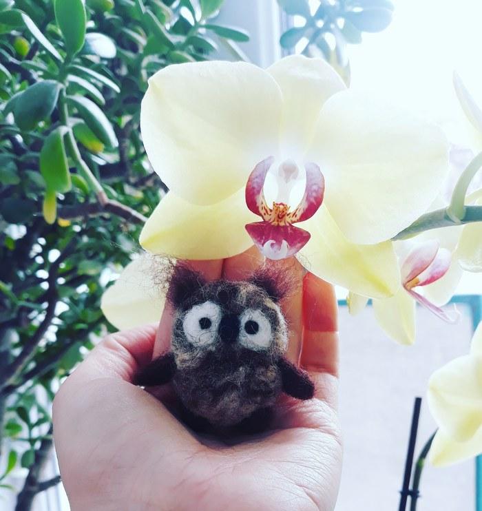 Просто сова, которая родилась сегодня утром