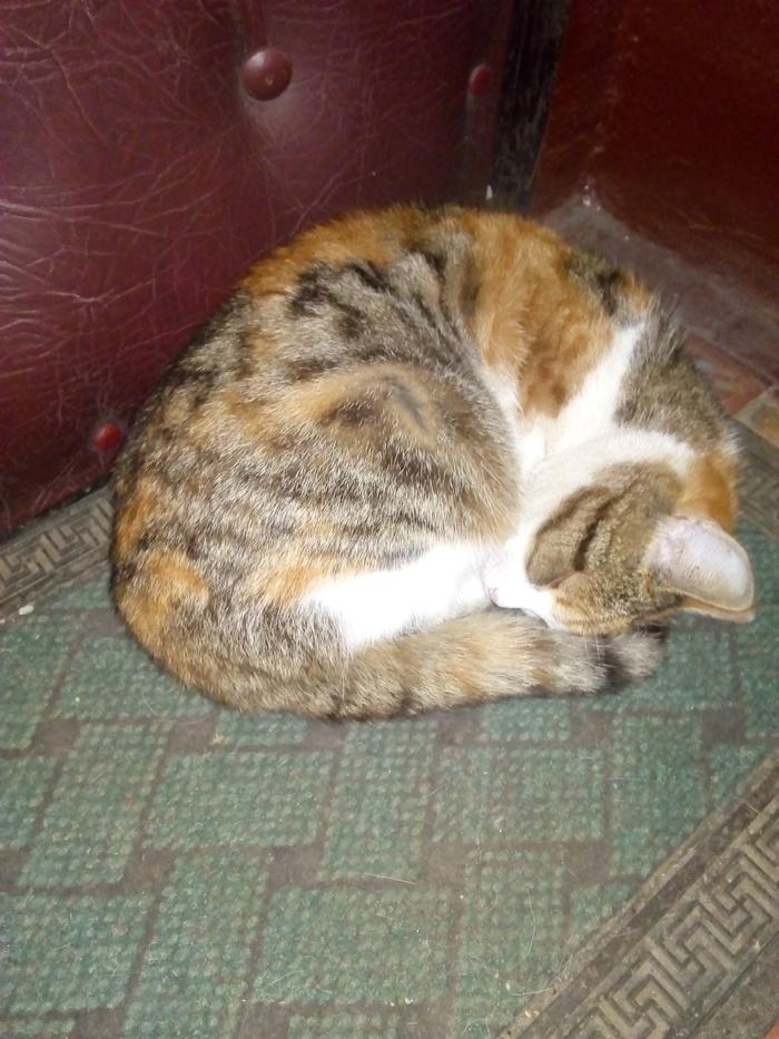 Найдена кошка/кот. Москва. Найден кот, Кот, Длиннопост, Москва, В добрые руки, Без рейтинга