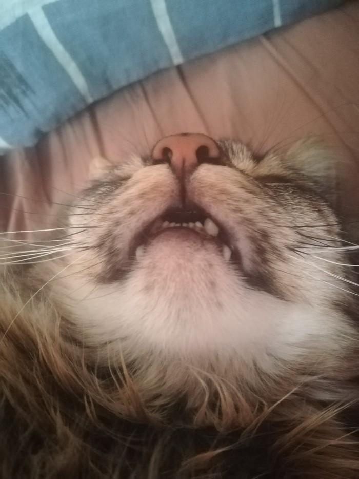 Фотогеничность моего кота. Кот, Ракурс, Фотогеничность, Длиннопост, Домашние животные