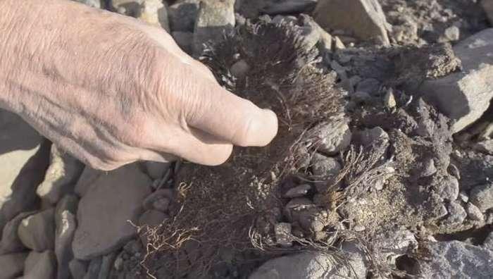 В Арктике оттаяли растения, замерзшие 40 тысяч лет назад Арктика, Лед, Растения, Видео, Длиннопост, Глобальное потепление