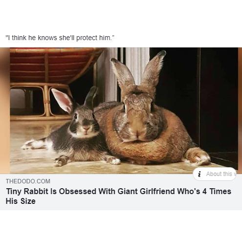 """""""Маленький кролик без ума от гигантской подруги которая крупнее его в 4 раза"""" Awd, Кролик, Антро, Фурри, Арт, Размер имеет значение"""