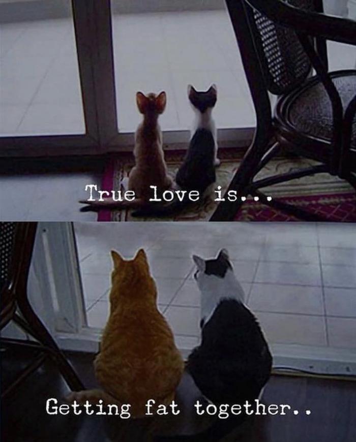 Любовь - это... Love is, Любовь, Жизненно, Кот, Домашние животные