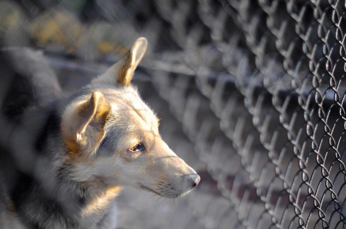 Пес-барбос :-) Фотография, Nikon, Домашние животные, Собака, Nikkor 50 1