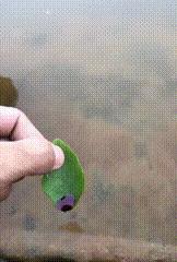 Капля чернил на листике делает из него моторную лодочку