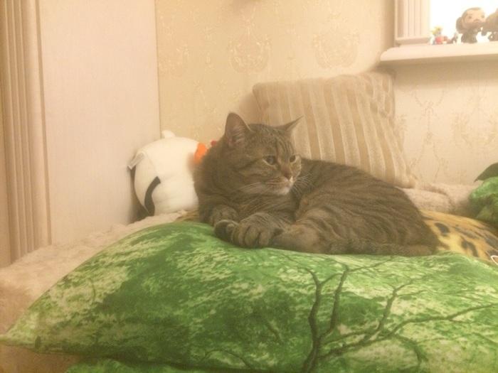 Стоит потерять бдительность и кот на подушке