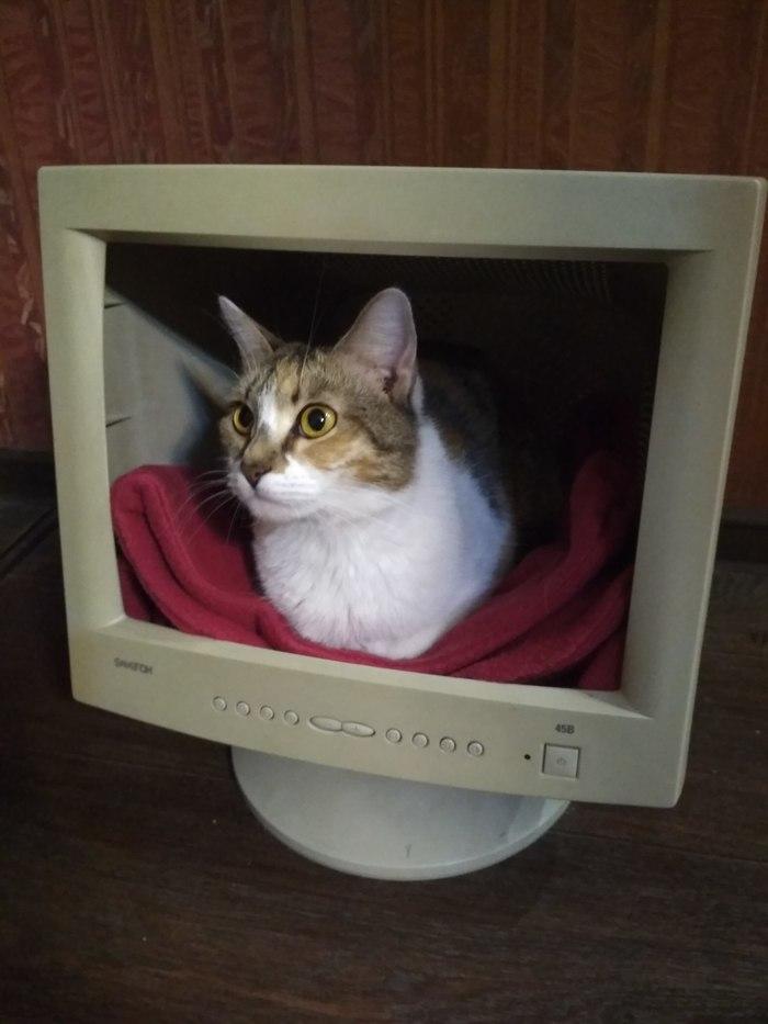 Котоламповый монитор Кот, Кошкин дом, Монитор, Своими руками, Домашние животные