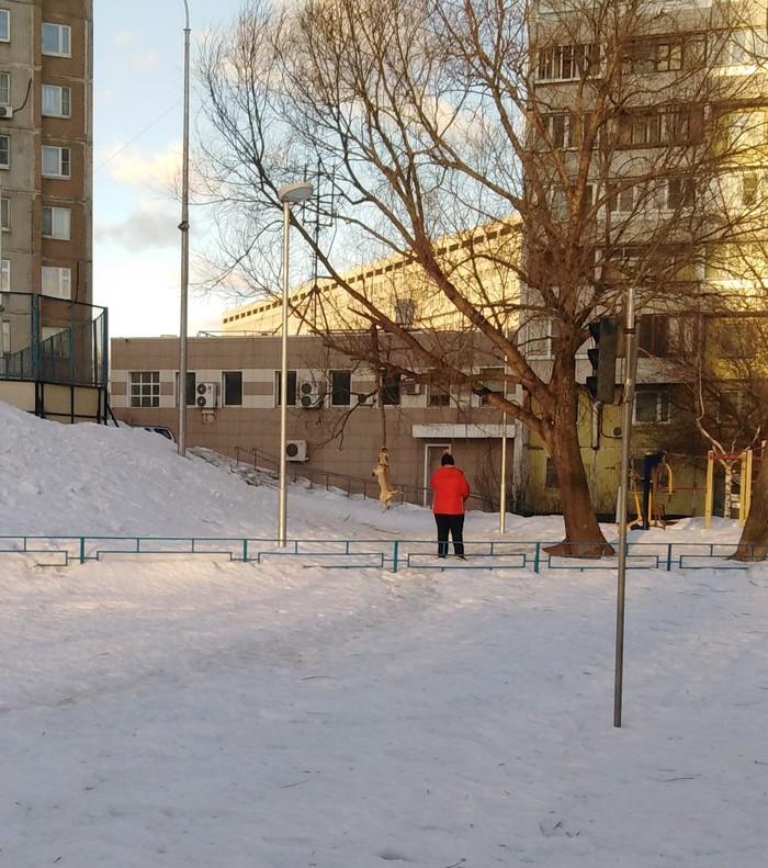 Утренний чилаут Собака, Выгул, Ветка, Забава, Длиннопост