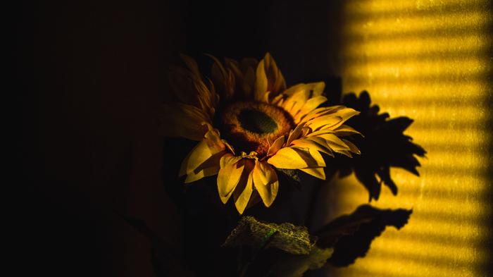 Уставшее закатное солнце зацепилось лучиками за жалюзи моего окна...