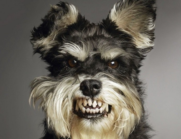 Так как у нее лапки Ржака, Собака