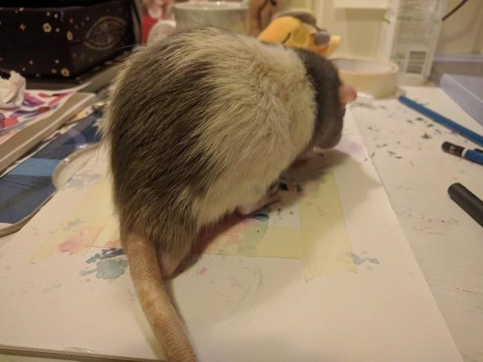 Не судите строго, он только начинает рисовать Крыса, Вконтакте, Рисунок, Картина, Длиннопост