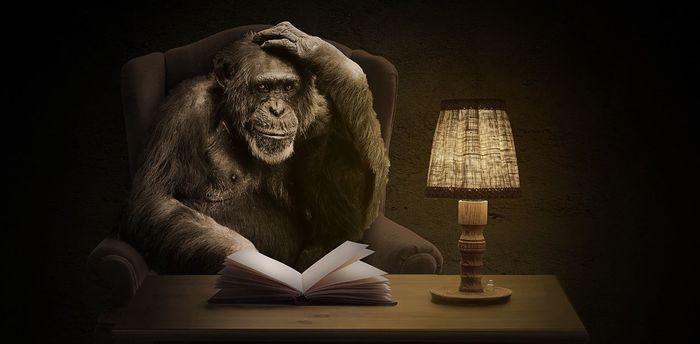 Эволюция мозга: нейроны-«спринтеры» обезьян проигрывают «стайерам» человека Мозг, Развитие мозга, Миграция нейронов, Человек, Шимпанзе